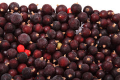 Frozen berries currants Stock Photos