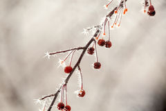 Frozen Berries with Frost Stock Photography