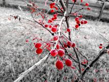 Frozen berries Royalty Free Stock Images