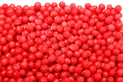 Frozen berries red currants Stock Images