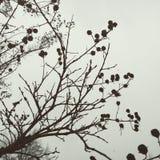 Frozen Berries. Spring Awakening Soon Stock Images
