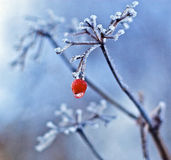 Frozen berry Royalty Free Stock Photography