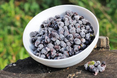 Frozen Bilberries in Bowl on Tree Stump Stock Photos
