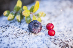 Frozen bilberry Stock Photos