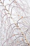 Frozen birch branches Stock Image