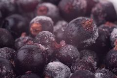 Frozen black currant Royalty Free Stock Photography