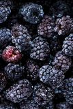 Frozen blackberries background. Close up royalty free stock photos