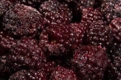Frozen blackberries closeup Stock Image