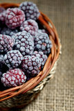 Frozen blackberries Stock Photography