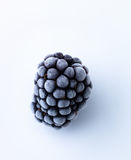 Frozen blackberry Royalty Free Stock Images