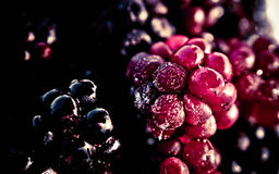 Frozen Blackberry fruit Royalty Free Stock Photos