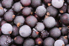 Frozen blackcurrants Stock Photo