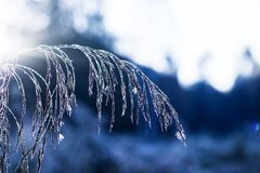 Frozen Blade in the morning royalty free stock photos