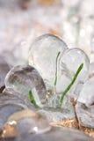 Frozen Blades of Grass Stock Photos