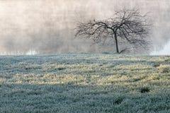 Frozen grassland in fog, Corbeanca, Ilfov County, Romania stock photography