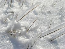 Frozen blades of grass. Frozen blades or grass after ice storm Royalty Free Stock Photos