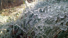 Frozen Blades of Grass. Frozen water droplets form on blades of grass Stock Photo