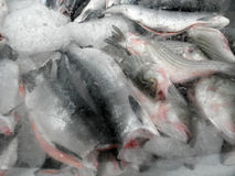 Frozen in a block of Ice Fish Stock Photo