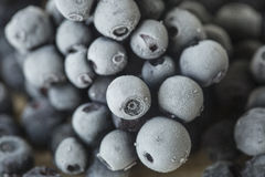 Frozen blueberries close-up. Fresh frozen blueberries close-up royalty free stock image