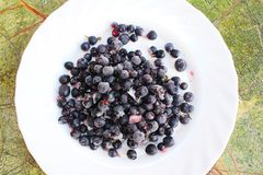 Frozen blueberries in a with plate royalty free stock photo