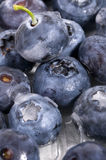 Frozen blueberries texture. Close up Stock Photography