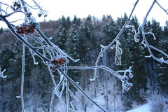 Frozen bough Stock Photography