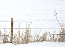 Frozen boundaries. Barbed wire fence with grass covered in snow Stock Photo