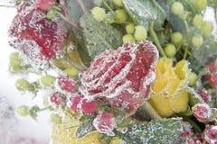 Frozen bouquet of dark-red roses Stock Photo