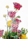 Frozen bouquet of red roses 2 Stock Images
