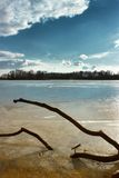 Frozen branch. Old branch on the frozen lake Royalty Free Stock Image