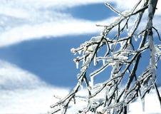Frozen branch Stock Image