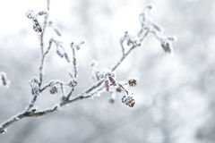 Frozen branch Stock Photos