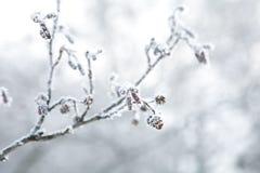 Frozen branch Stock Photos
