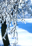 Frozen branch Stock Photography