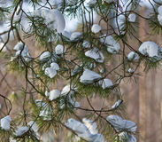 Frozen branch Royalty Free Stock Photography