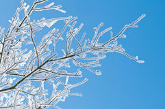 Frozen Branch. With blue sky in winter Royalty Free Stock Images