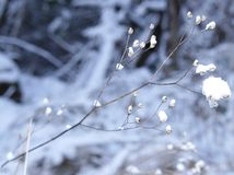 Frozen branch background Stock Photography