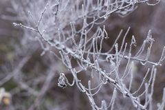 Frozen branch close up. Gothic composition of nature. The onset of winter stock photos