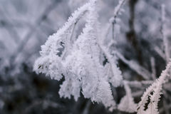 Frozen branch covered with snow Royalty Free Stock Photos