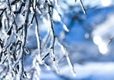 Frozen branch - ice Stock Photos