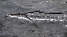 Frozen branch over river. A branch of a tree frozen over on a cold stream stock video footage