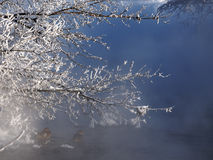Frozen branch over river. Royalty Free Stock Photography