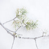 Frozen branch and snow  Stock Images