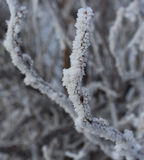 Frozen branch Royalty Free Stock Photos