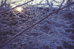 Frozen branch in sunset, winter and snowy background Royalty Free Stock Images