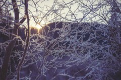 Frozen branch in sunset, winter and snowy background Stock Image