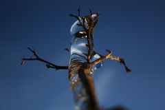 A frozen branch of a tree lit by the sun`s rays Royalty Free Stock Photo