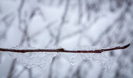 Frozen branch on winter Stock Photography
