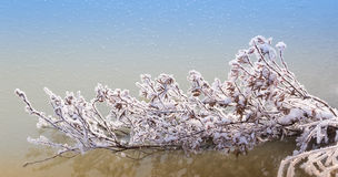 Frozen branch on a winter river Royalty Free Stock Photos