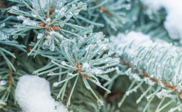 The frozen branch Stock Image